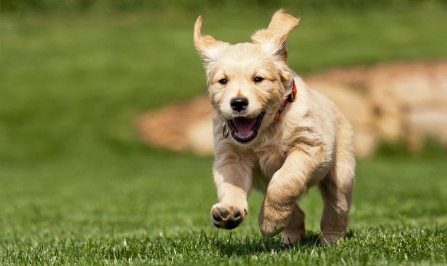 Don't Leave the Dog Behind: Visit Pet-Friendly Monterey!