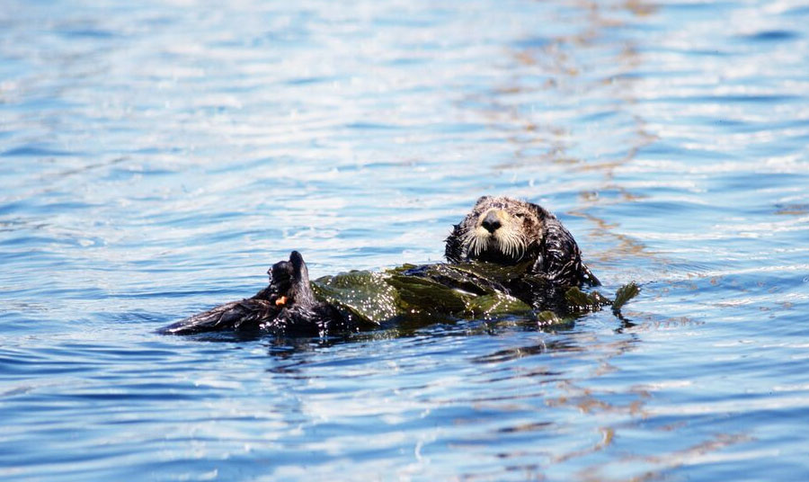 Frolicking Otters spotted along The Rec Trail