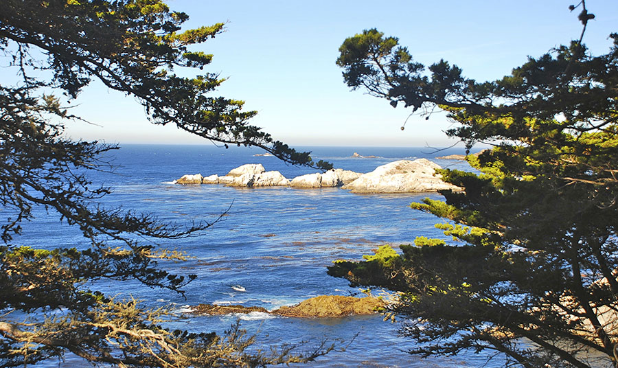 Get out and enjoy the natural beauty of the Point Lobos State Natural Reserve