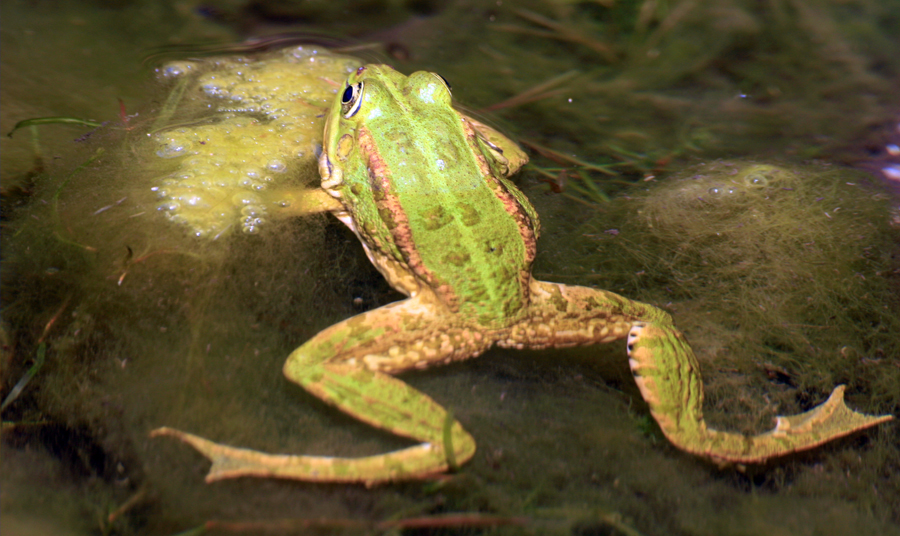 Hop on Over to the Frog Pond Wetland Preserve