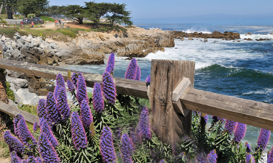 Keeping it Green: The Inns of Monterey get Green Seal Certified