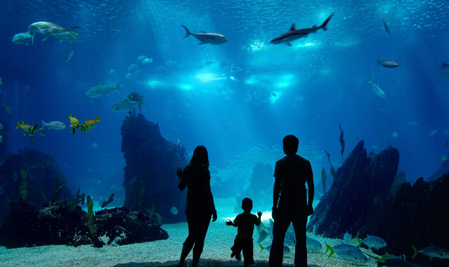 Monterey Bay Aquarium Winter Hours