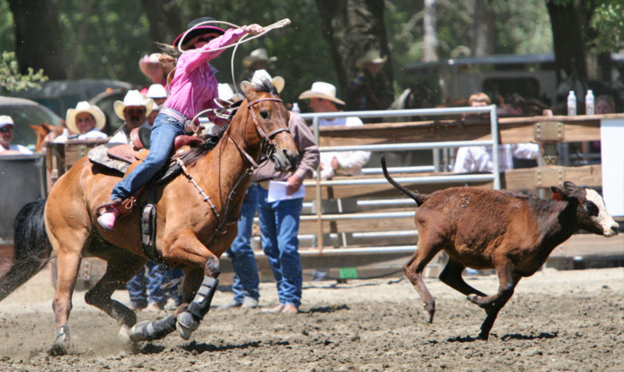 Saddle up cowboys and cowgirls - the rodeo's coming to town