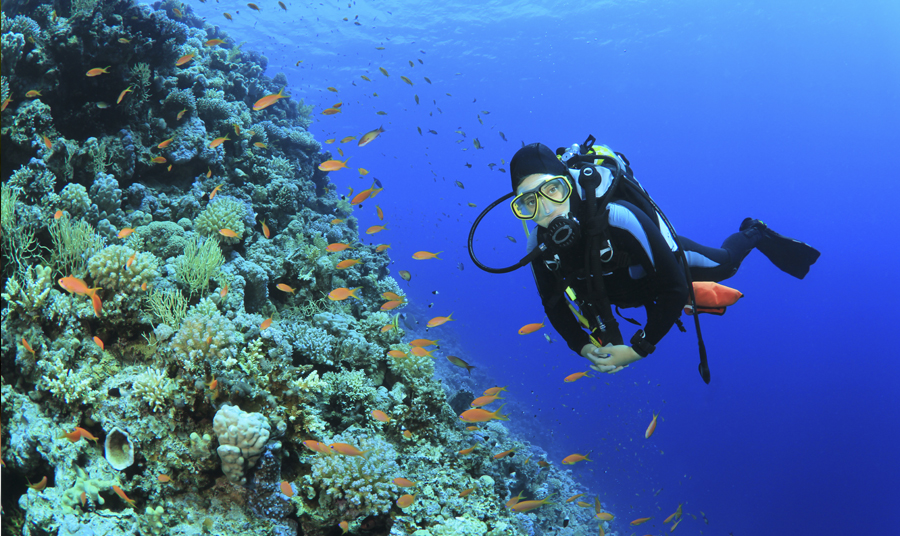 Scuba Diving Adventures in the Monterey Bay National Marine Sanctuary!