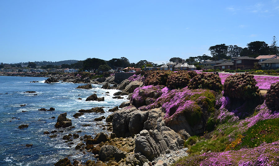 Spring in Monterey