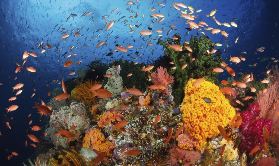 World Oceans Day Celebration 2012